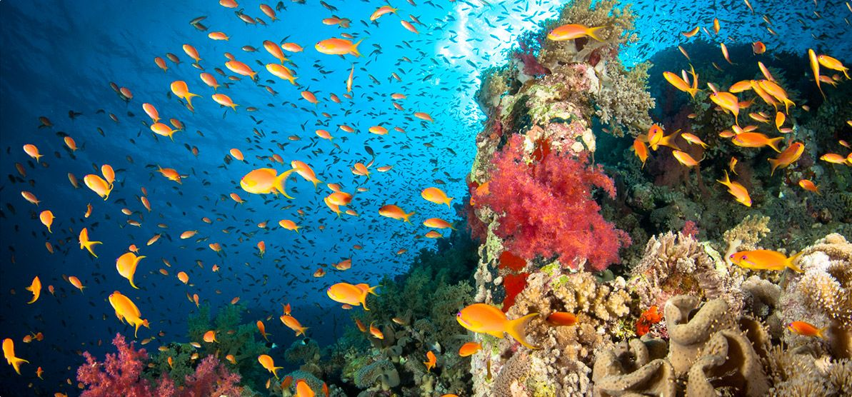 Fauna marina Illes Medes